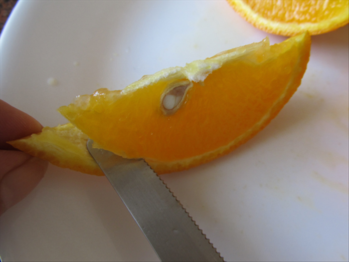 Grab the peel end of a quarter with the tips of your pointer and thumb. Place the knife at the end of the orange and push it gently between the meat and the peel.